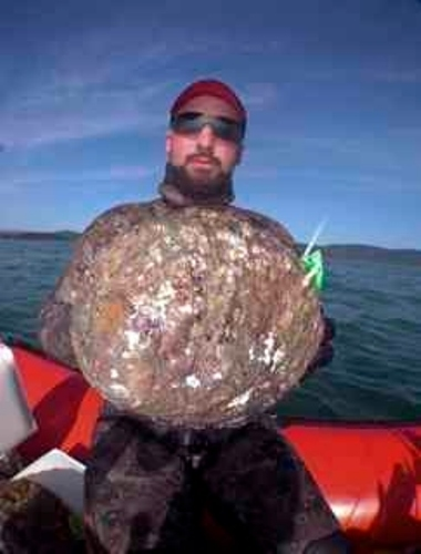Largest Abalone